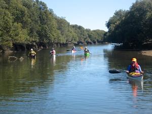 Barker Inlet mangroves
